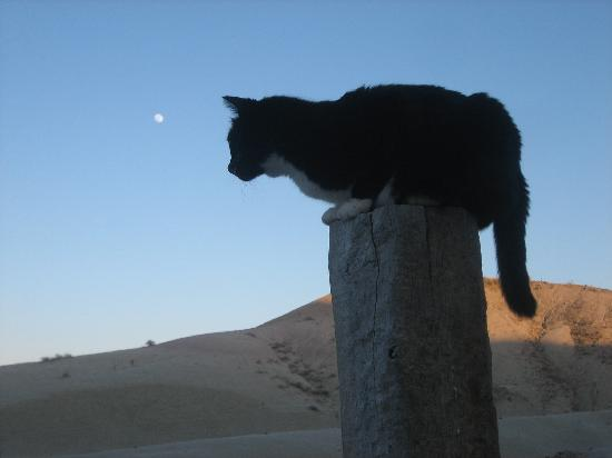 Circle View Guest Ranch: Full Moon & Cat