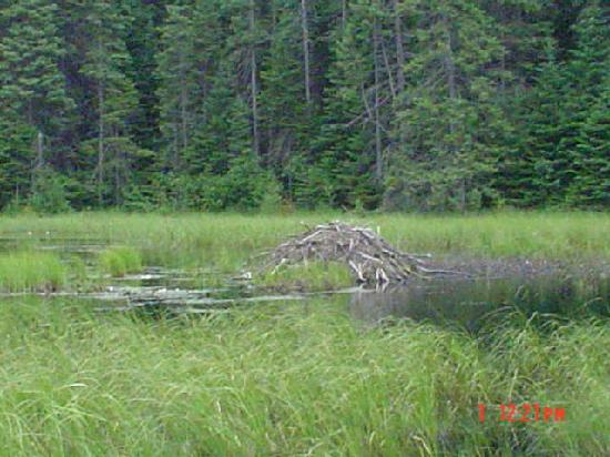 Algonquin Provincial Park, Καναδάς: Beaver hike