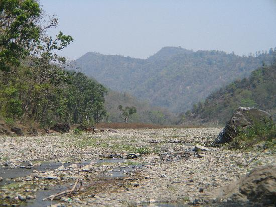 Rajaji National Park照片