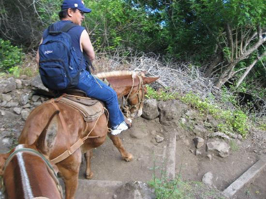 Molokai Mule Ride : On the trail...