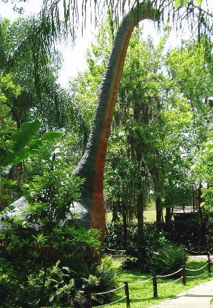 Plant City, FL: brachiosaurus