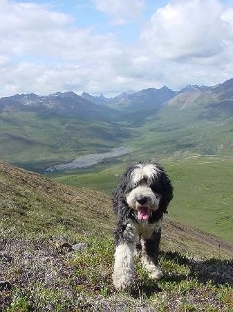 Yukon, Canada: Jingles on Golden Sides