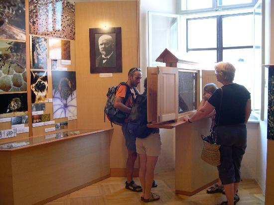 Beekeeping Museum (Cebelarski muzej) : Inside the museum