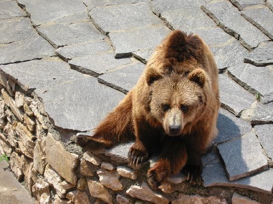 Parco Faunistico le Cornelle: orso