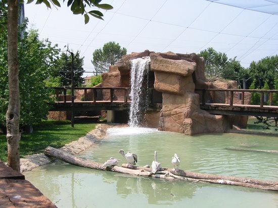 Parco Faunistico le Cornelle: cascata