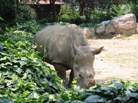 Valbrembo, Italia: rinoceronte