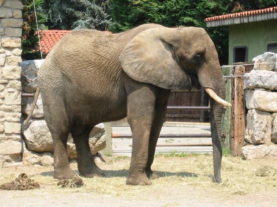 Valbrembo, Italy: elefante