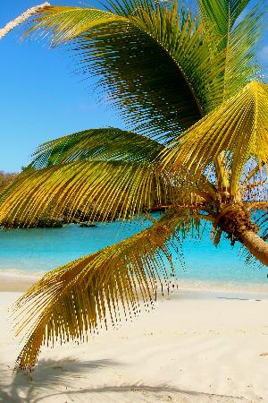 Star Villas: Paradise!!!