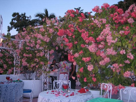 Su Casa: The beautiful garden