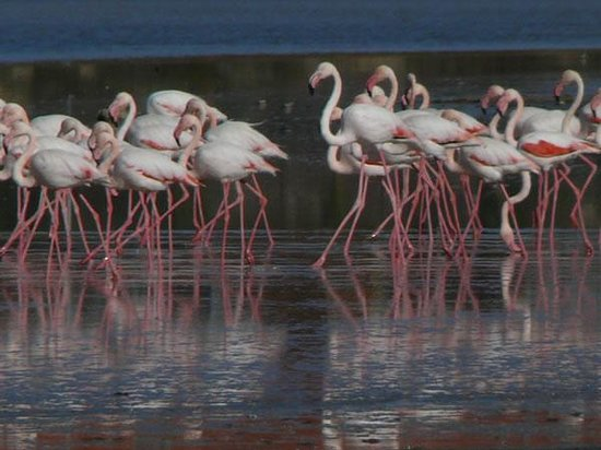 Larnaca, Zypern: In winter thousands of flamingos and other birds use it as a refuge.
