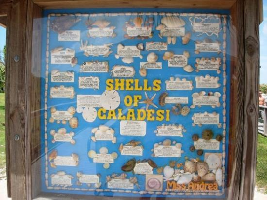Caladesi Island State Park: The Shells of Caladesi board at the dock area