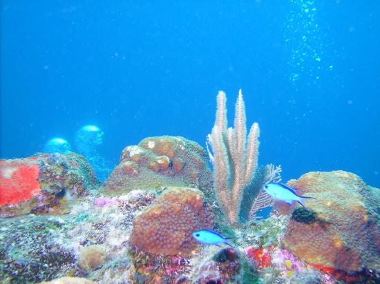 Hamanasi Adventure and Dive Resort: reef shot