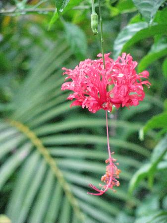 Anthony's Key Resort: flower