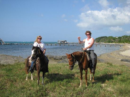 Anthony's Key Resort: horses