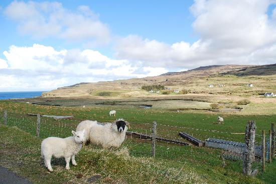 Carters Rest Guesthouse: Sheep outside Carters
