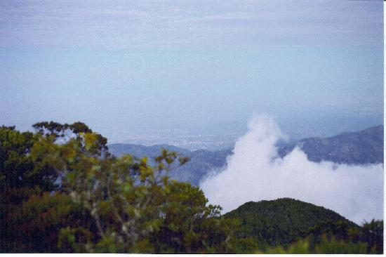 Parc national de Blue Mountains, Jamaïque : View over Kingston from Blue Mountain Peak