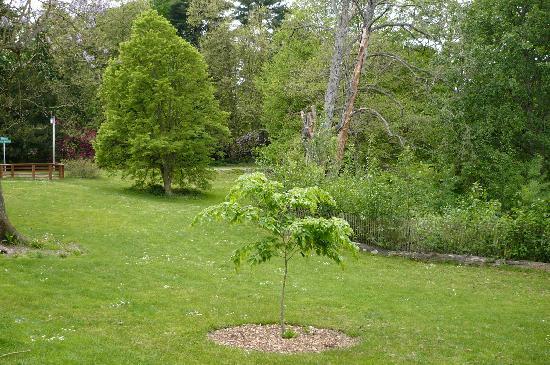 Washington Park Arboretum : Green Everywhere!