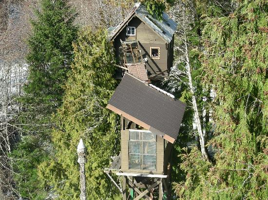 Cedar Creek Treehouse: close up of treehouse from observatory