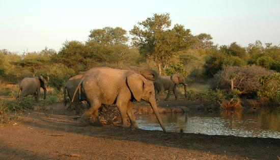 Kings Camp: elephants by the watering hole