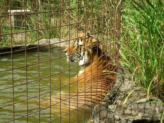 Big Cat Rescue Tour Hours