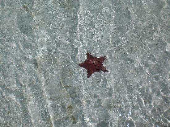 Coral Caverns Dive Resort : Starfish near Coral Caverns