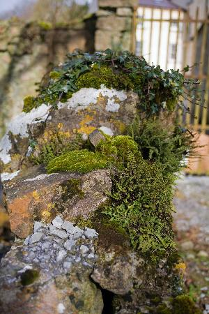Ballinderry Park: Classical Irish landscape starting at the doorsteps