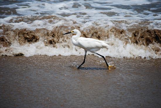 Club Med Ixtapa Pacific: Wild life on the beach