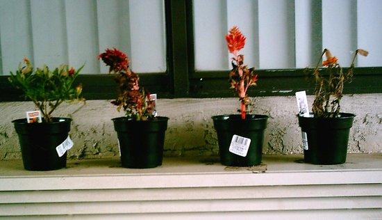 Motel 6 Monroe: Pretty Plants