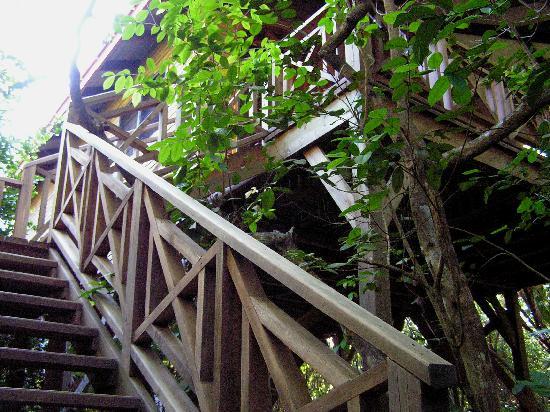 Hamanasi Adventure and Dive Resort: tree house