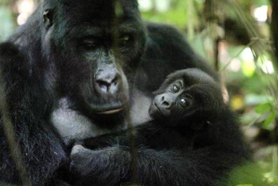 Goma, สาธารณรัฐประชาธิปไตยคองโก: maternità