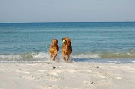 Cape San Blas Fl Is A Pet Friendly Beach