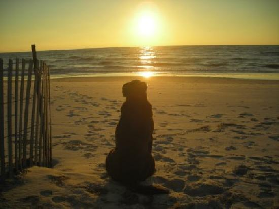 Cape San Blas: Enjoy a beach vacation with your dog in the FLorida Panhandle
