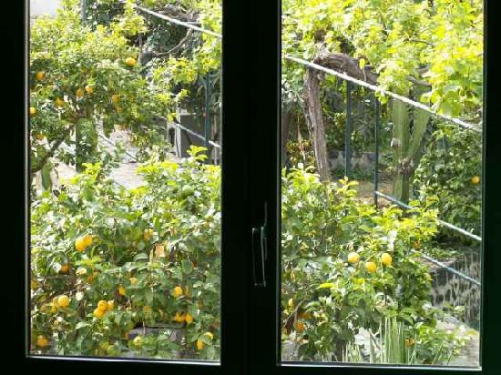Villaggio Alkantara: Limonenbäume; vom Schafzimmerfenster