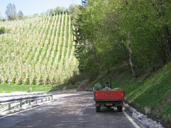 Lana, Italy: narrow road, slow tractor, apple orchard