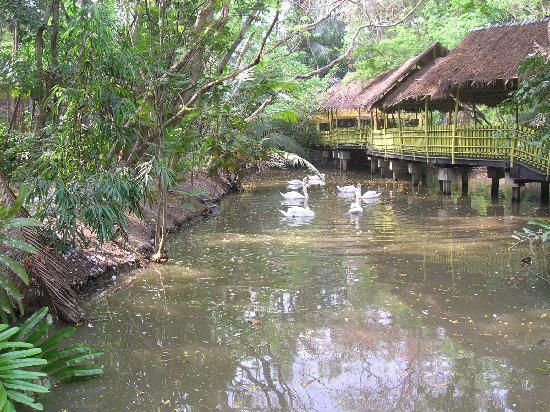 The GOD\'s Garden - Picture of Safari World, Bangkok - TripAdvisor