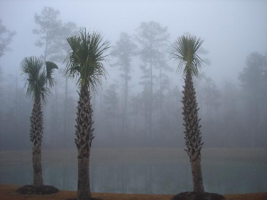 Pawleys Island, Carolina del Sur: Palm in the Mist
