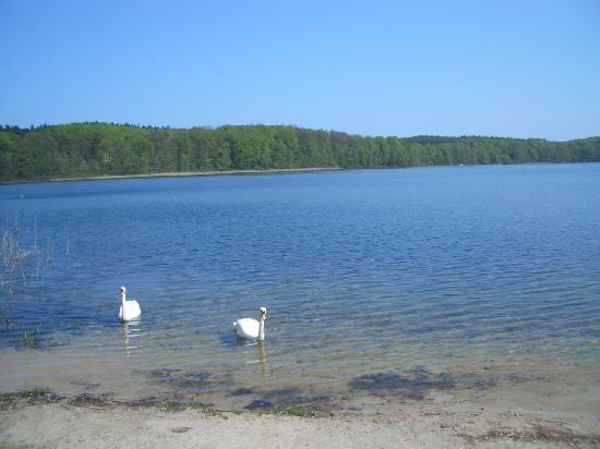 Usedom, Germany: Strand und Schwäne
