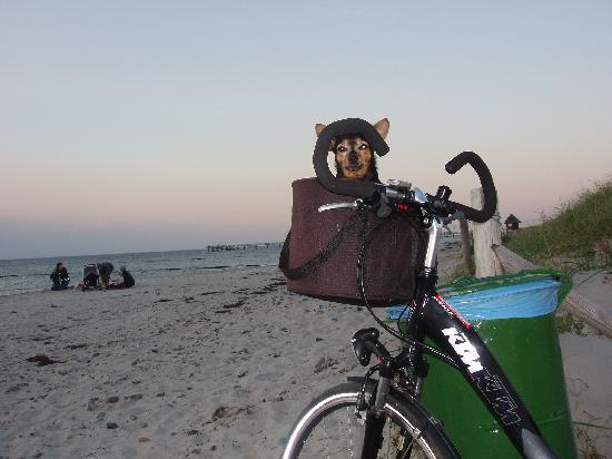 Ostseehotel Wustrow: Mit dem Fahrrad unterwegs