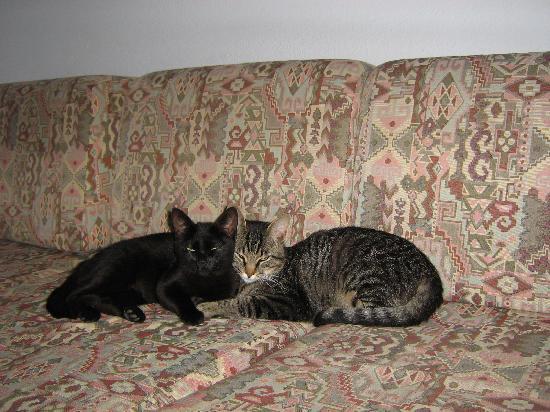 Prado Villas: The Local Cats