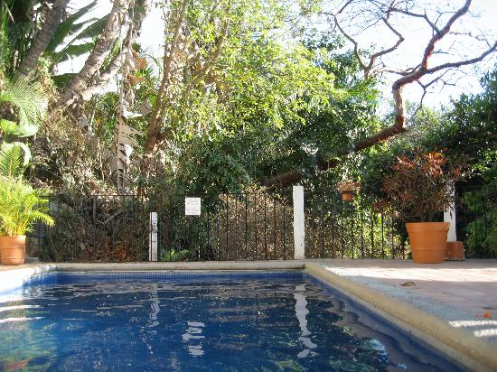 Villa Olivia: The pool...