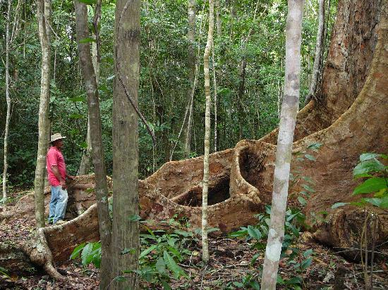 Trilha do Visgueiro: Roots of Visgueiro Tree Dwarf Guide