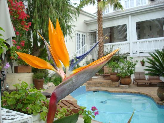 Blackheath Lodge: Pool/Garten