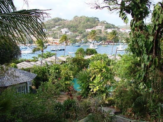 Young Island Resort : It's a jungle out there!!