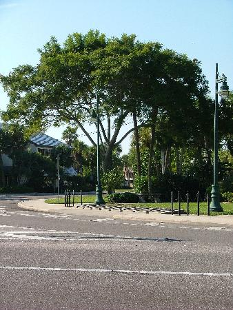 St. Armands Circle: The Circle from Starbucks