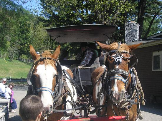 "1000 Acres Ranch Resort: the ""horse and buggy"" ride our last morning"