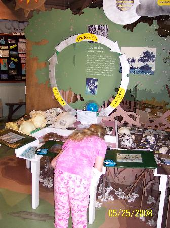 Gulf Coast Visitor Center: Interactive Displays
