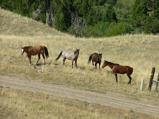 Fish Creek House Bed and Breakfast: horses to ride