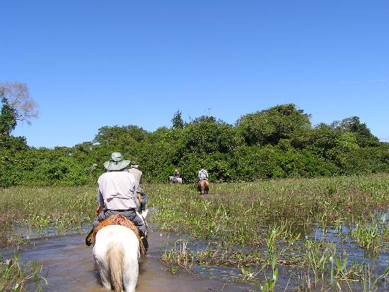 Araras Pantanal Ecolodge: One way to avoid the water - and it's not even deep here!!
