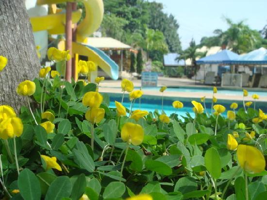 Waig Crystal Spring Resort : @waig