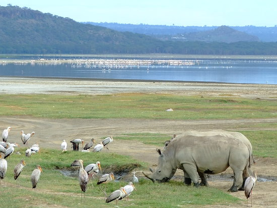 Lake Nakuru National Park, Kenia: View of Lake Nakuru